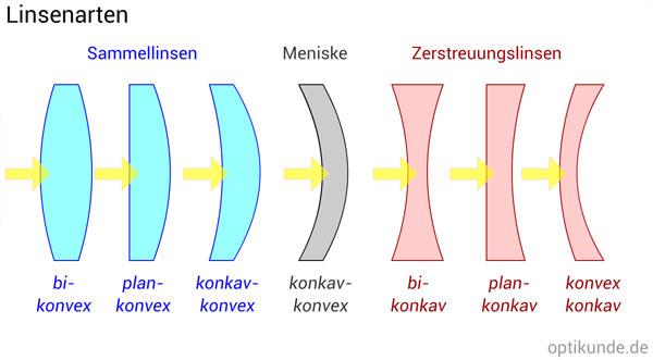 Linsen-Arten